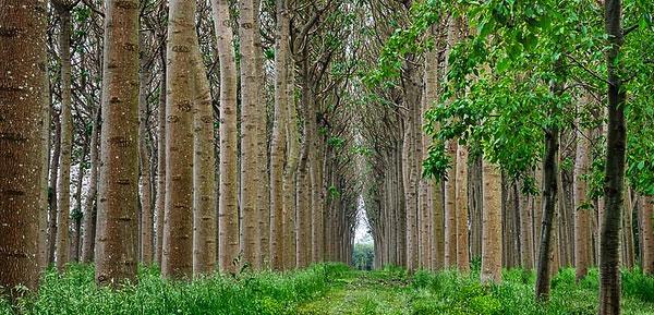 فیلم دوره 2 روزه آموزشی پالونیا جهت زراعت چوب (در حال ضبط و تدوین)