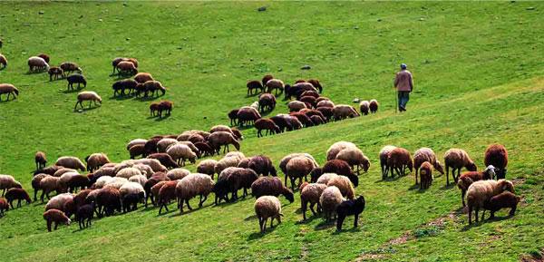 فیلم 3 دوره آموزشی گوسفند داشتی ، پروار ، مدیریت تولید مثل و تلقیح مصنوعی (دانلود فوری)